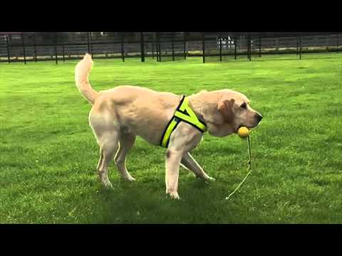 Two new sniffer dogs join Merseyside Police