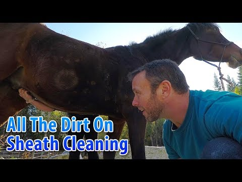 All The Dirt on Sheath Cleaning