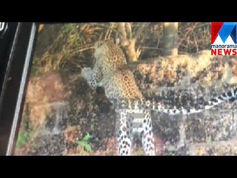 Leopard attacks three in Kannur town | Manorama News