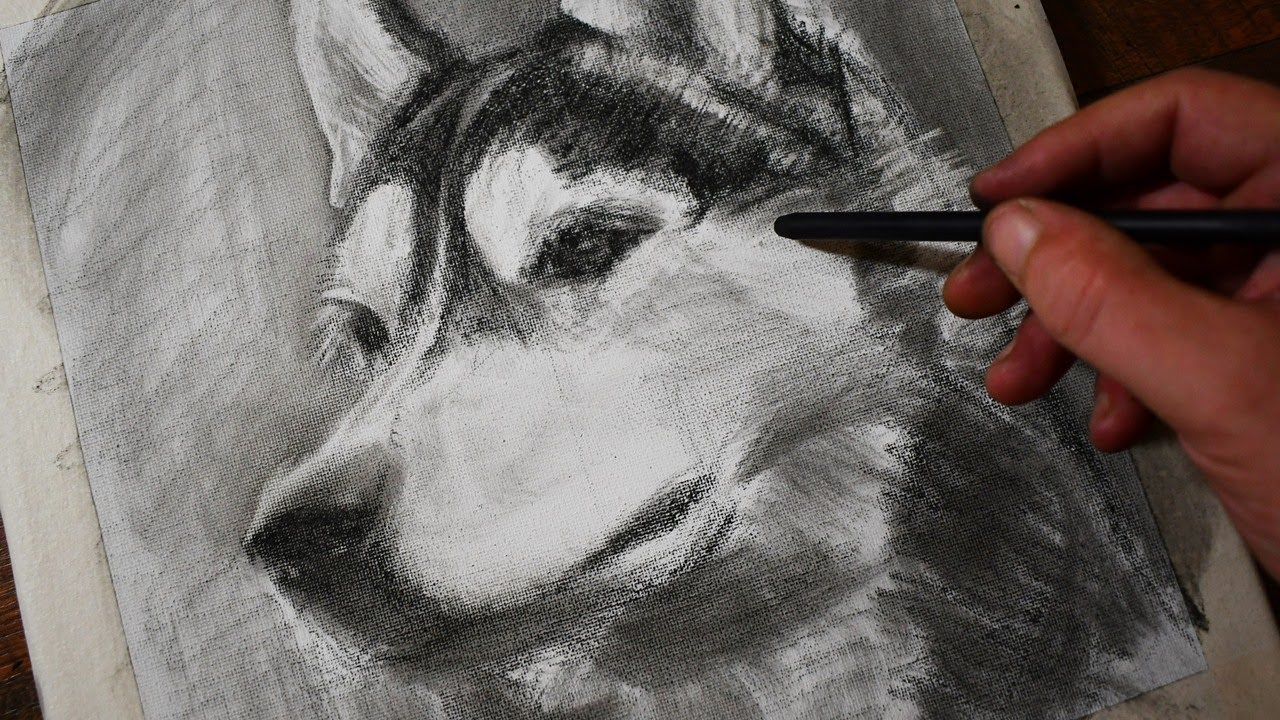 How to Draw a Husky Dog with Pastel Pencils / Drawing for the Under Painting