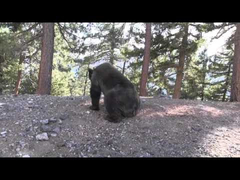 Bear Release Vimeo Upload 720P