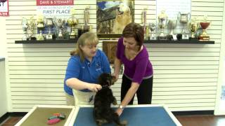 Introducing Your Puppy To Grooming With Kennelwood Pet Resorts Trainer, Kim Hyde