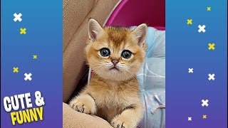 Cute and Funny Animals videos Compilation #10 Cutest Animals