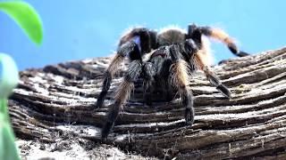 видео Домашние экзотические животные