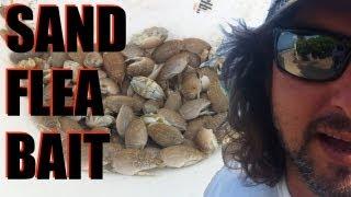Sand Flea #1 Pompano Bait