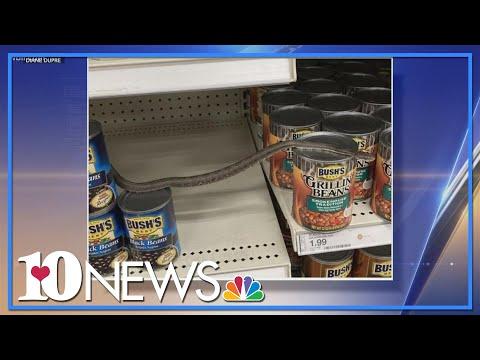 North-Carolina-woman-finds-snake-slithering-on-Target-shelf