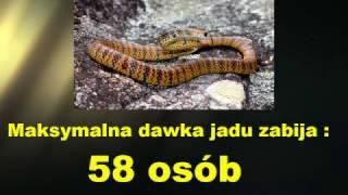 Najbardziej jadowite węże świata