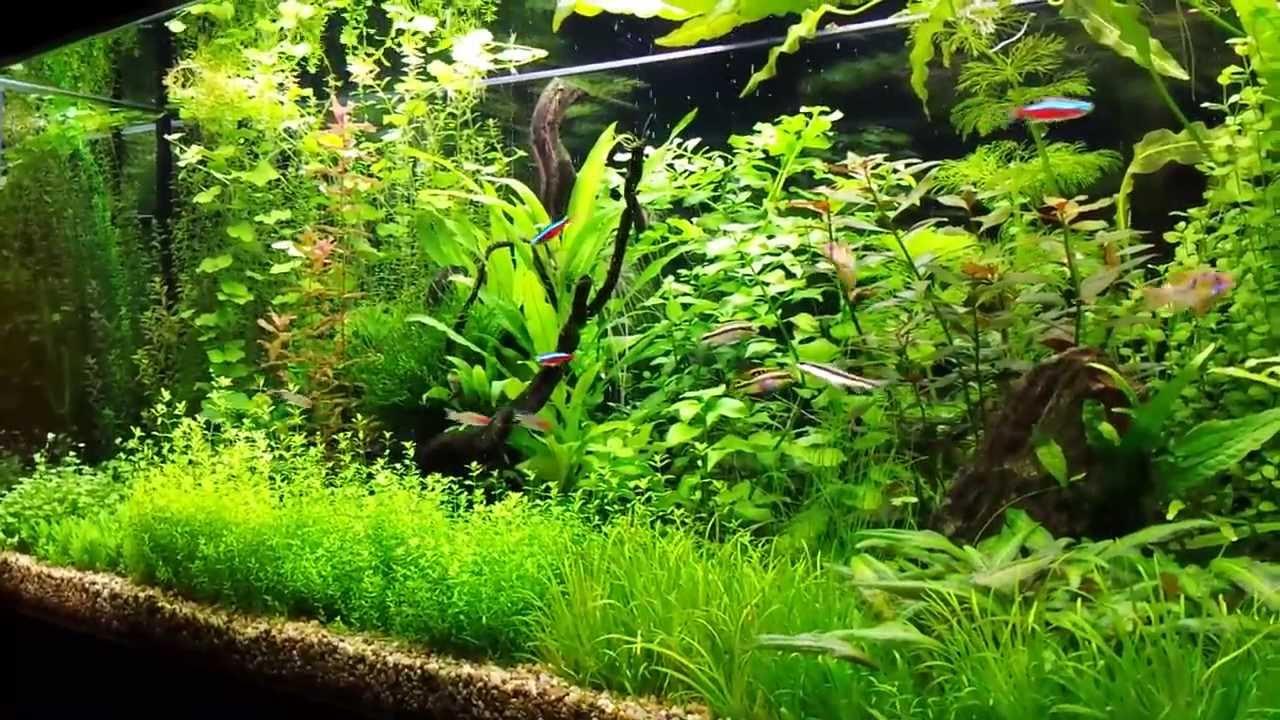 Pearling aquarium plants YouTube