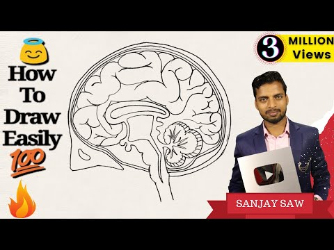 How to Draw Human Brain Step by step for Beginners !