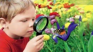 Урок 9 Природознавство 1 клас. Як людина пізнає світ?