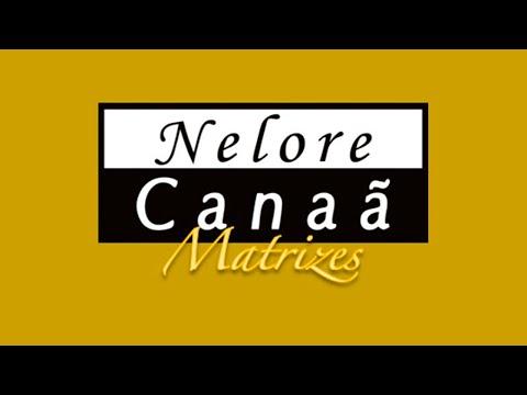 Lote 12   Ginara FIV AL Canaã   NFHC 933 Copy