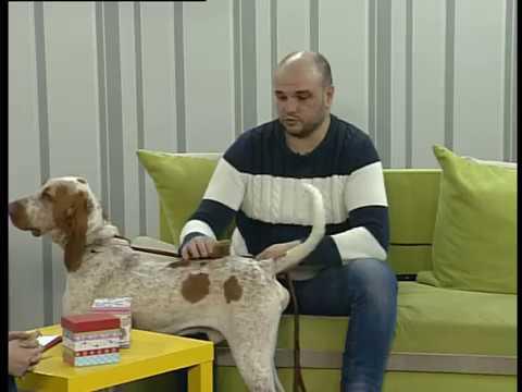 Ранок-панок. Олександр Гасанов і його Італійський бракк Дунай (Bracco italiano)