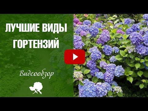 Сорта гортензии �� Топ 10 лучших сортов ➡ как выбрать растения в сад