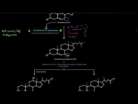 Bile Acids / Bile Salts: Synthesis and Conjugation [free sample]