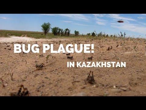 [S1 - Eps. 90] BUG PLAGUE! in Kazakhstan