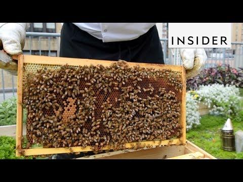 Hotel in NYC Harvests Honey