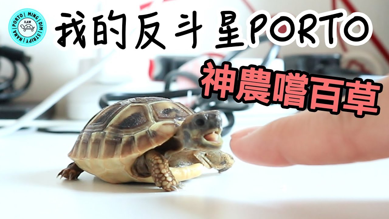 赫曼反斗星PORTO </p>  </article>        <small>                 <a href=