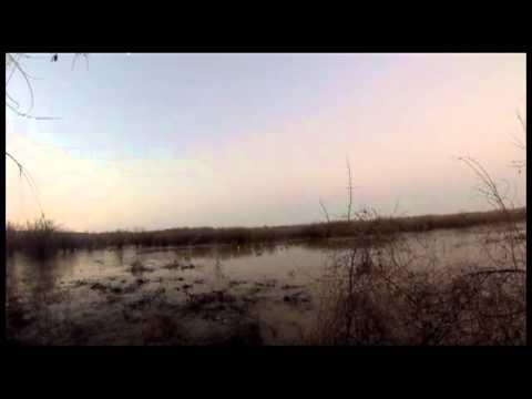 East Tn Head Hunters head west to Weakley Co and Arkansas