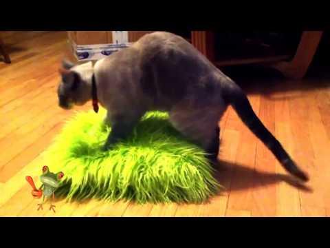 funny cat fail viedos