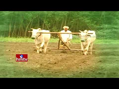 Farmers Celebrate Eruvaka Purnima | B.Tech Student Turns Into A Successful Farmer | Nela Talli|HMTV