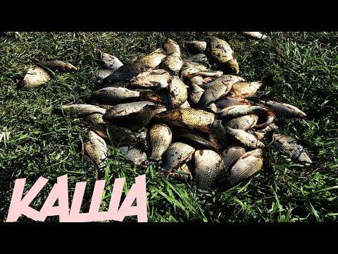 Уловистая каша для рыбалки на карася и карпа Как я делаю кашу для рыбалки