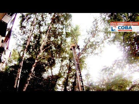Гражданин залез на дерево, сказав, что спасает дочь президента