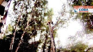 Спасение с дерева 40 лет ВЛКСМ(Гражданин залез на дерево, сказав, что спасает дочь президента., 2015-06-30T04:56:19.000Z)