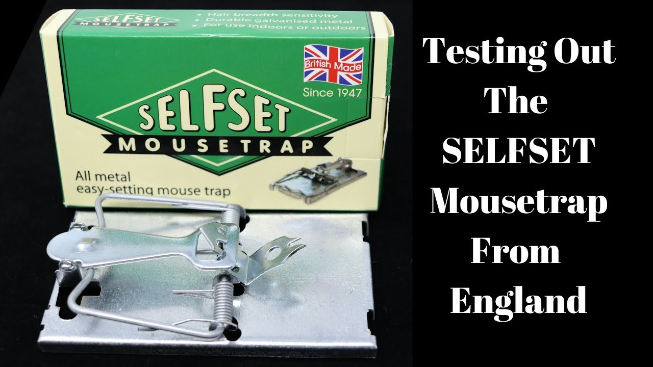 testing-outthe-selfset-mousetrap-from-england-mousetrap-monday