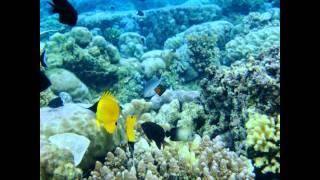 Download Video Taman Laut Bunaken - Sulawesi Utara | Tempat Wisata di Indonesia MP3 3GP MP4