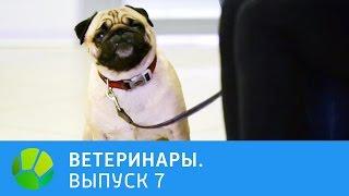 Ветеринары. Ферма по разведению насекомых, пёс начал хромать, у кошки перелом рёбер | Живая Планета