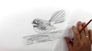 How to draw a realistic fantail. Part 12 - Drawing texture on the bird