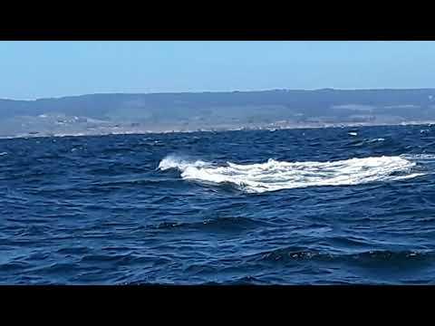 ORCA (Fatfin) 4/14/2019