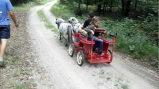 Miniature Horse Drawn Carriage