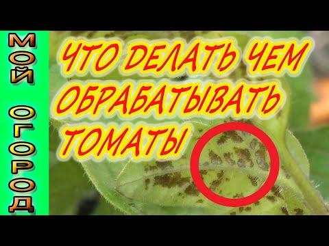 Появились пятна на томатах? Срочно нужно применять меры!