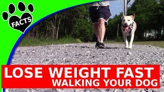 Dogs 101:  Lose Weight Fast While Walking Your Dog - Animal Facts