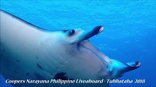 Manta Ray   Tubbataha Reef 2018   Best of Philippine Diving