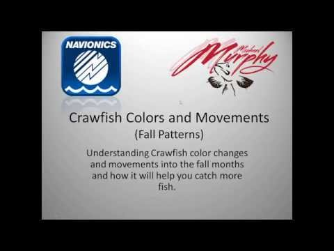 """Webinar: """"Crawfish Colors and Movements: Fall Patterns"""" with Michael Murphy"""