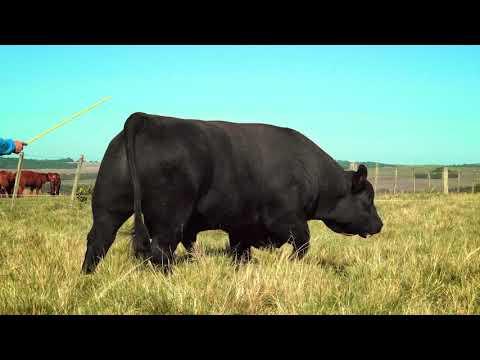 LOTE SP395   DOUBLE BLACK ULTRABLACK