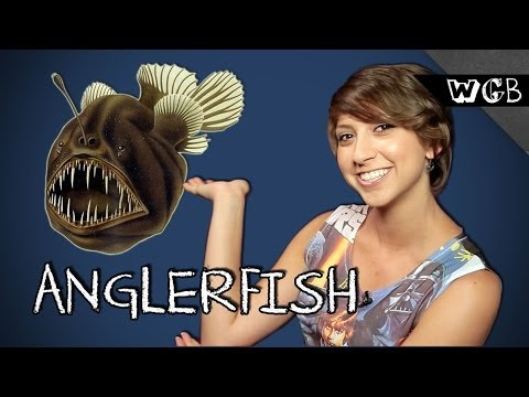 7 Bizarre Facts About Anglerfish