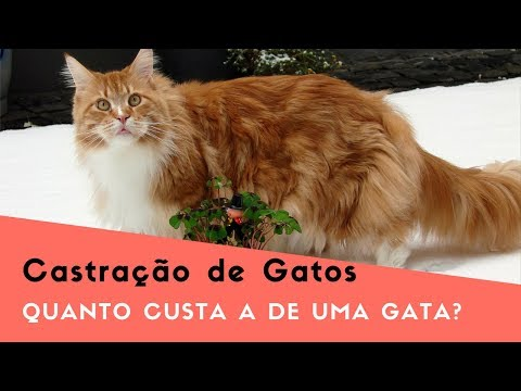 Castração de Gatos e Quanto Custa Uma Castração de Gata