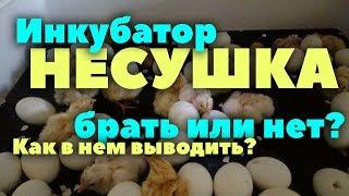 инкубатор Несушка: стоит ли покупать? // Таблица инкубации // Честный обзор