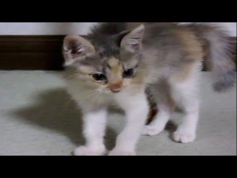子猫保護 威嚇威嚇の連続