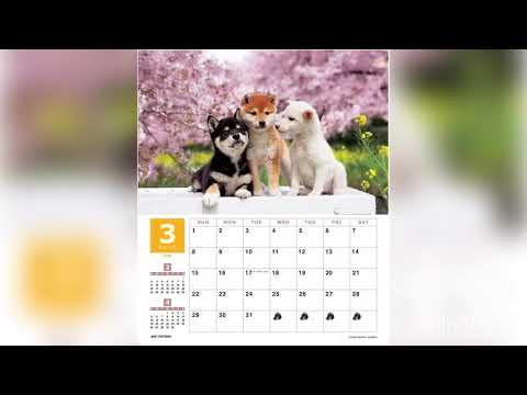 shiba-inu-wall-calendar-2020-all-puppy-pictures