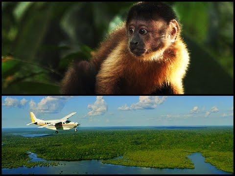 あのアマゾンを大冒険しよう!映画『アマゾン大冒険~世界最大のジャングルを探検しよう!~』予告編