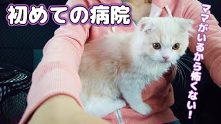 初めての病院…怯えるかと思いきや膝に乗って甘えてくる子猫がかわいい