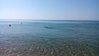 Дельфины на пляже. База отдыха Ставрополье, ст.Благовещенская, Анапа, 2015 г.(Дельфины на пляже. ст. Благовещенская, Анапский район, база отдыха