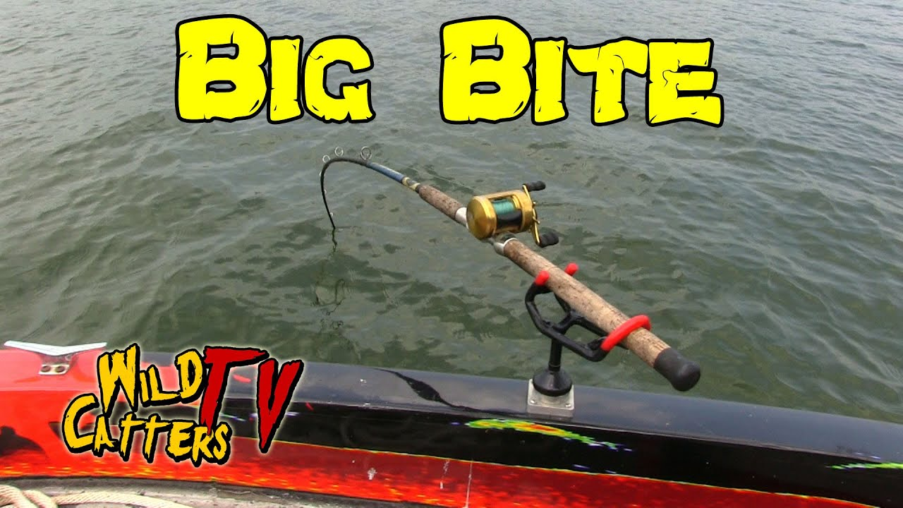 Ohio river action fishing for blue catfish around mussel for Fishing in cincinnati