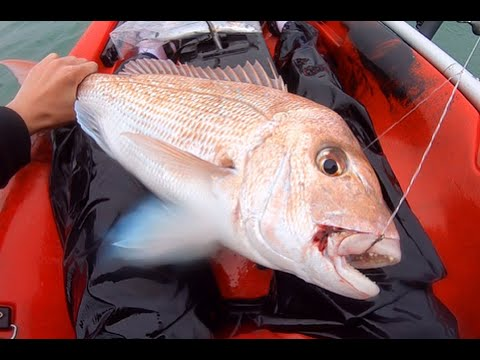 BIG SNAPPER - Auckland City Kayak Fishing - Bait/Softbait