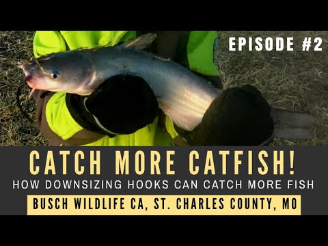 How To Catch More Catfish | Downsizing Fishing Gear | Busch Wildlife Conservation Area, MO