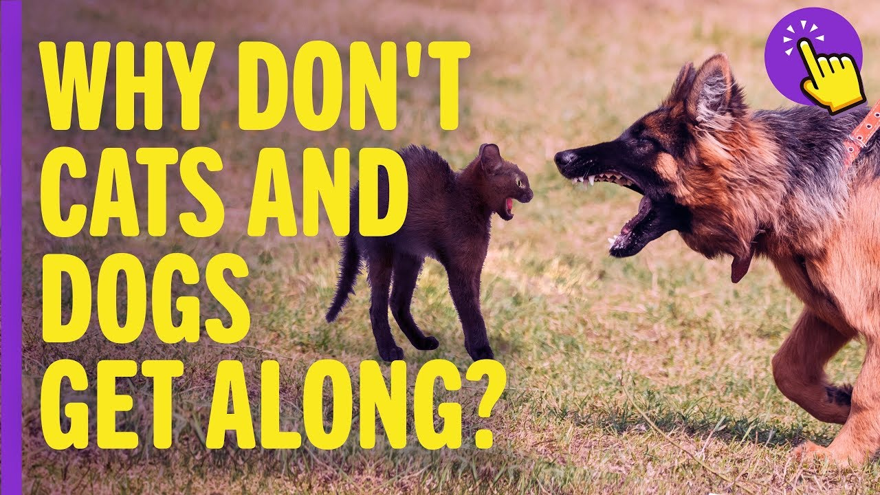Why don't cats and dogs get along? | Interesting to know | Keep it in mind